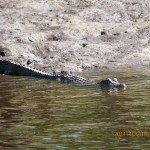 Econfina River Kayaking